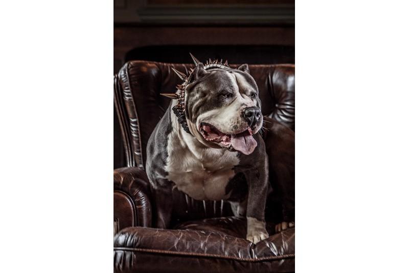 dogmeat-geit