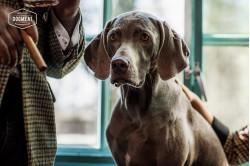 dogmeat-eend-rund
