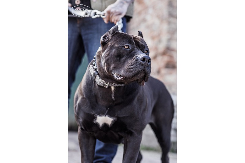 dogmeat-fokkersausage