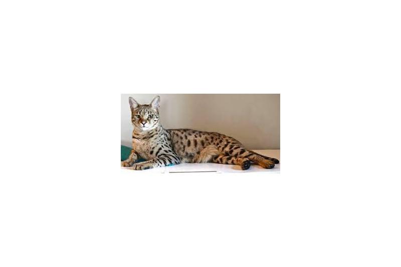 Cat's Nature-kvv-beefmix-dogmeat